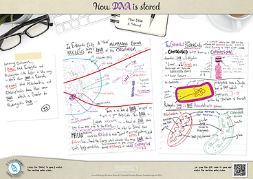 160.-How-DNA-is-Stored-A3-poster.png