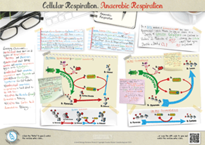 221.-2-types-of-Respiration.-Anaerobic-R