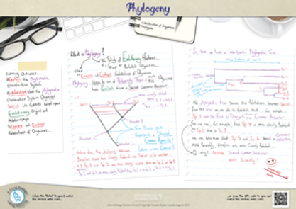 Classification - Phylogeny A3 Poster PDF for A Level Biology