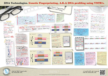 Gene Technologies DNA Profiling / Genetic fingerprinting using variable tandem repeats (VNTR) A3 Poster PDF for A Level Biology