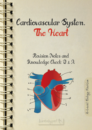 137.-The-Heart-A4.png