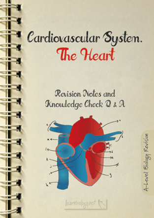 The Heart structure and function for a-level biology revision notes and knowledge check pdf