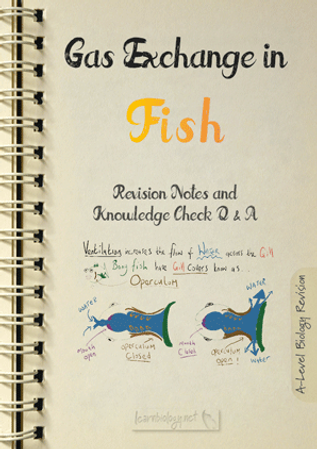 Gas exchange in Fish The Structure and Function of Gills Revision Notes with Knowledge Check Questions and Answers PDF for A- Level Biology