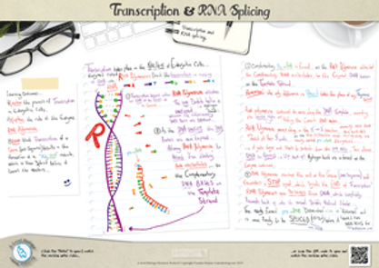 Genetics - Transcription and mRNA splicing A3 Poster PDF for A Level Biology