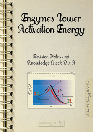 Enzymes - Activation Energy PDF