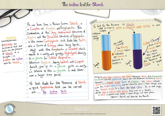 A-Level biology the iodine test for starch Revision Notes Poster A3 PDF.