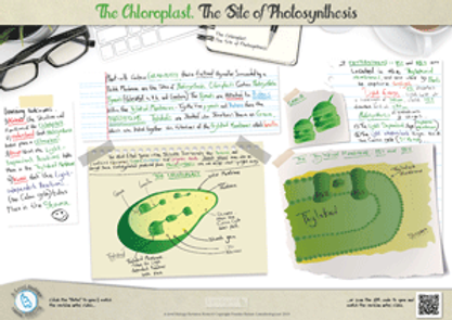 Cell organelles the structure and function of chloroplasts the site of photosynthesis A3 Poster PDF for A Level Biology