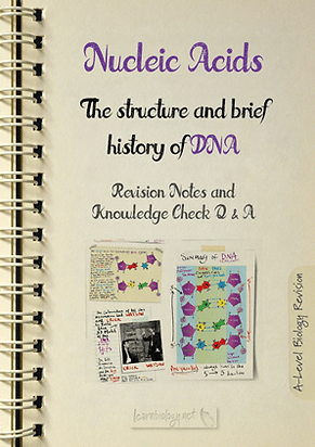 Nucleic Acids - The Structure and Brief History of DNA