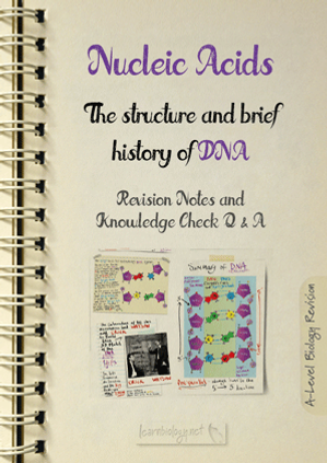 A Level Biology:Nucleic Acids - The Structure and Brief History of DNA Revision Notes with Knowledge Check Questions and Answers PDF