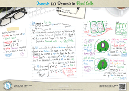 Osmosis in Plant cells - Explaining Stomatal regulation in terms of Osmosis A3 PDF for A Level Biology