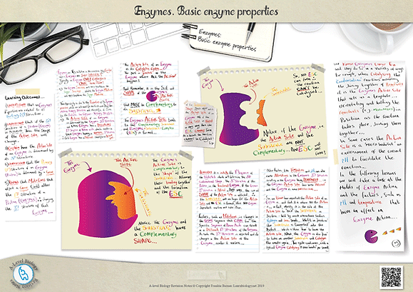 A-Level biology: Enzymes - Basic Enzyme Properties Revision Notes Poster A3 PDF