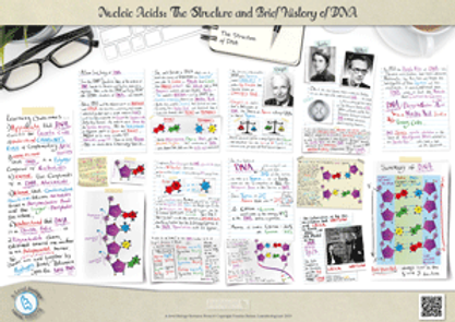 A Level biology: Nucleic Acids - The Structure and Brief History of DNA Revision Notes Poster A3 PDF
