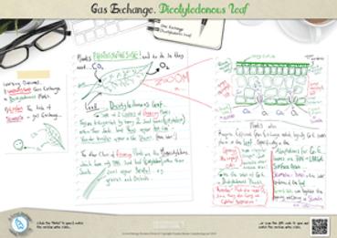102.-Gas-Exchange---Dicotyledonous-Leaf-
