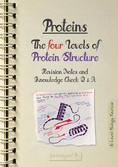 Protein Structure PDF