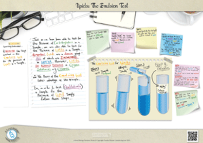 A-Level biology Lipids: The Emulsion test for lipids Revision Notes Poster A3 PDF.