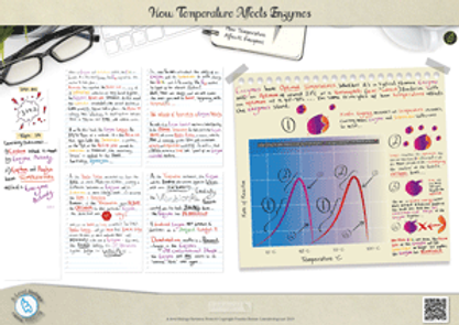 Enzymes-temperature---A3-Poster.png