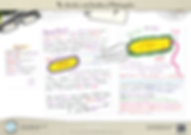 Prokaryote-Structure---A3-Poster.png