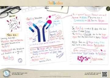 80.-Antibodies-A3-poster.png