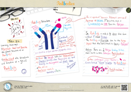The Structure and Function of Antibodies A3 Poster PDF for A Level Biology