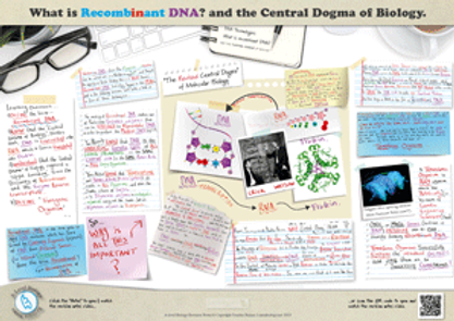 The central dogma of biology | What is recombinant DNA? A3 Poster PDF for A Level Biology