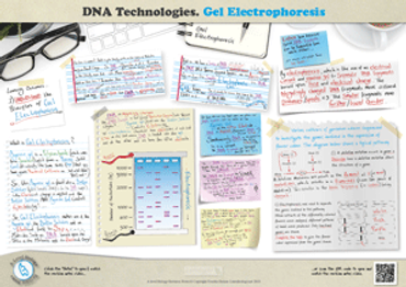 359.-Electrophoresis-A3-poster.png