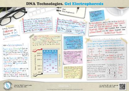 Gene Technologies Gel Electrophoresis A3 Poster PDF for A Level Biology