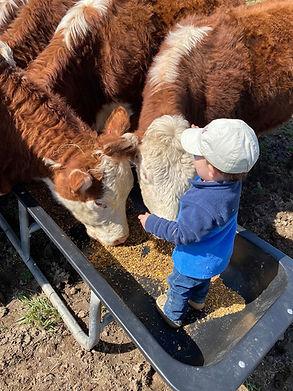 Cort in Feed Trough.jpg