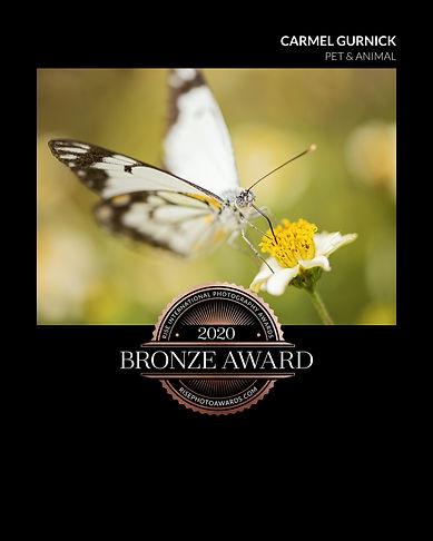 DSC_6365 butterfly_certificate.jpeg