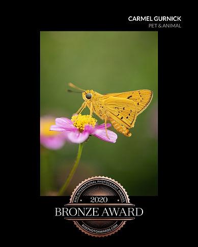 DSC_3396 moth_certificate.jpeg