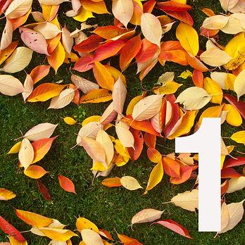 Autumn_entry.jpg