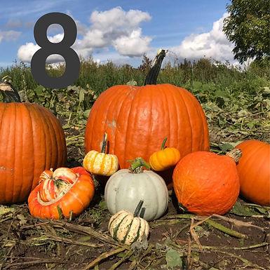 Autumn_entry8.jpg