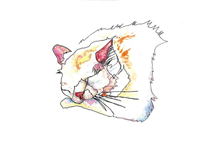 Koko - blind drawing 2