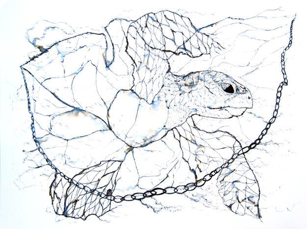 Turtle net