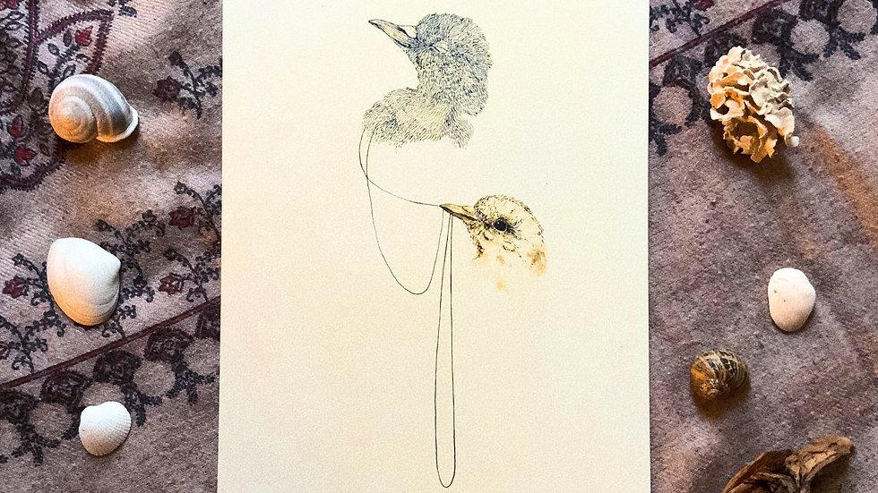 Doves - Print