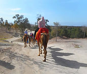 Camel Rides at Lalla Takerkoust