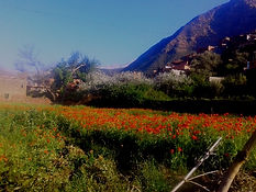 Poppy Field on a spring day trip to Ourika Valley