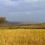 golden wheat fields marrakech.jpg