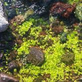 water plants.jpg
