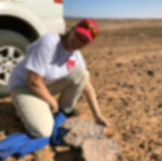 Karima fossil hunting in the Sahara.jpg