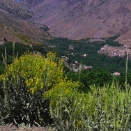 Early summer in Imlil Valley