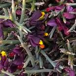 Mountain spring flowers