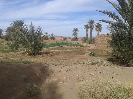 A well managed desert garden