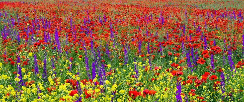 Colorful wildflowers in sunlight