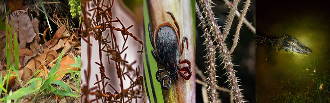 hiking hazards snake, barbed wire, ticks, thorns, aligator caiman