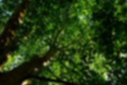 tree-nature-forest-branch-light-plant-wo