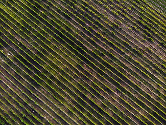 vineyard aerial view.jpg
