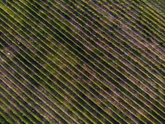 vineyard aerial view.jpg