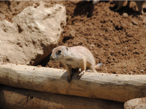 """Private Investments Risk Part 4: """"Don't be a Lemming"""""""