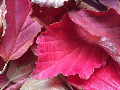 Autumn Equinox -Celebrating Change