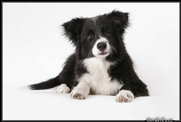 pups_and_people_021